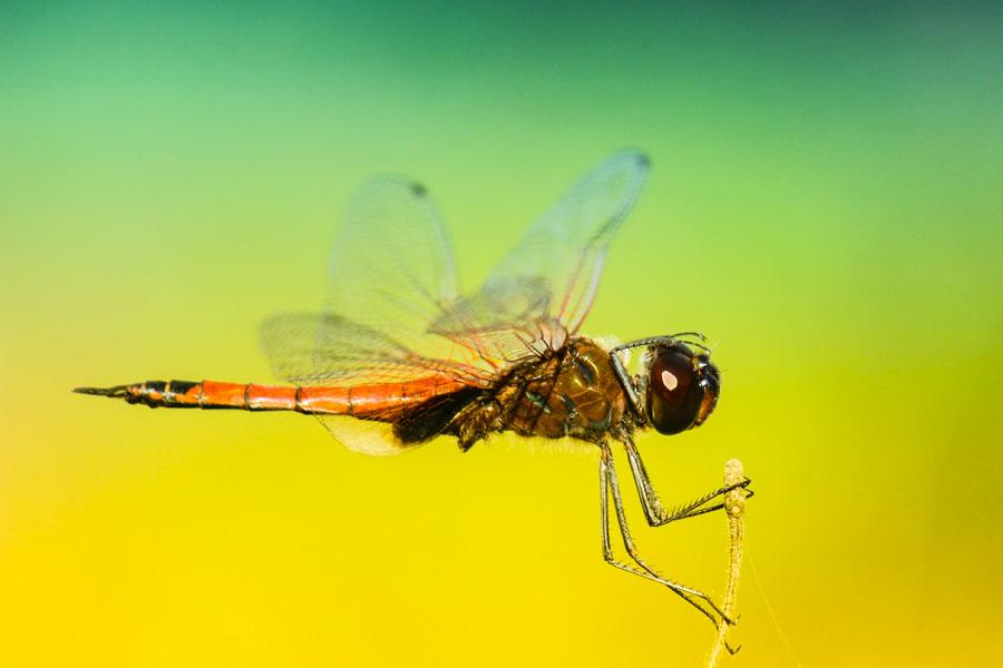 Zanzare D'inverno
